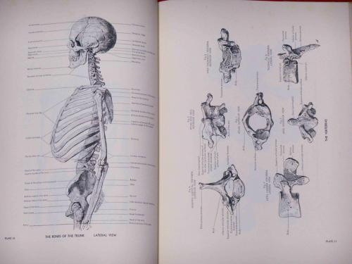 An Atlas of Anatomy for Artists やさしい美術解剖図(Schider, F ...